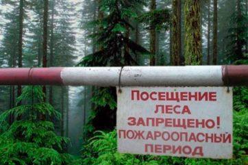 запрет посещения лесов